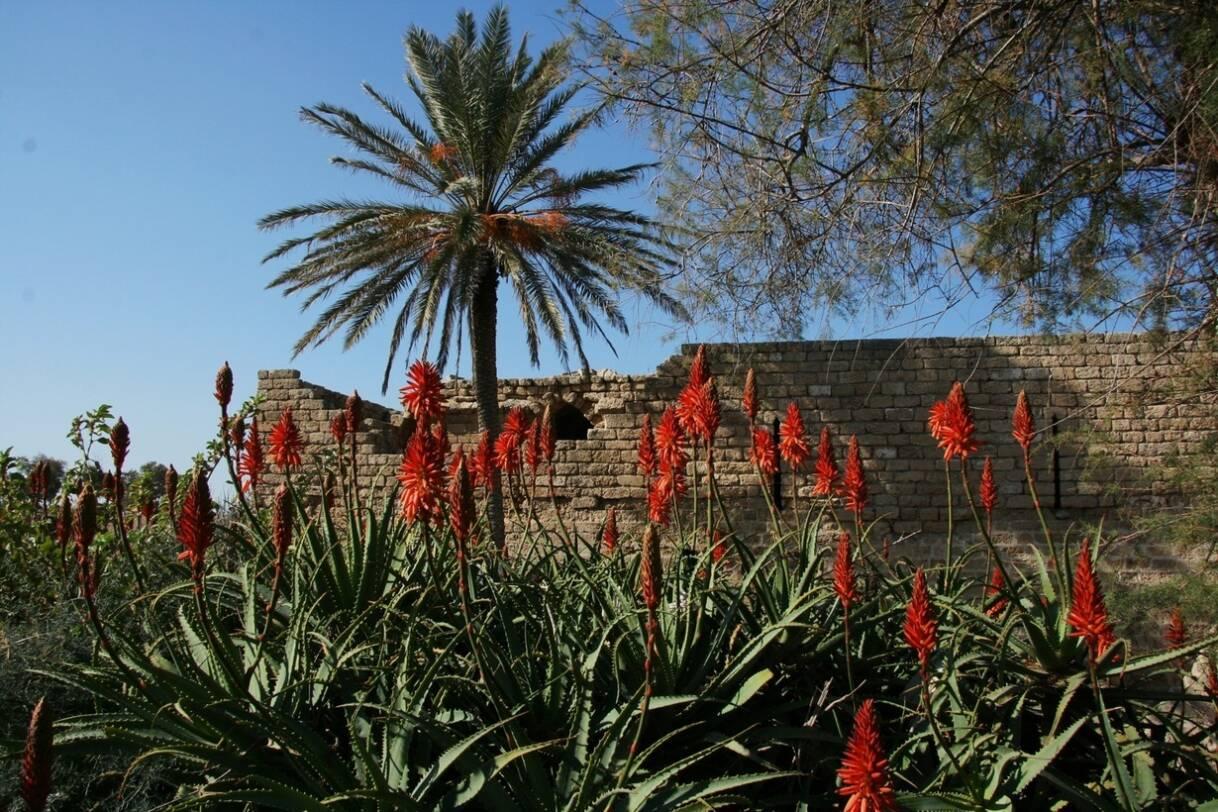 Israël, in het spoor van de Verspieders - IsraelGalilea - Caesarea - Karmelgebergte