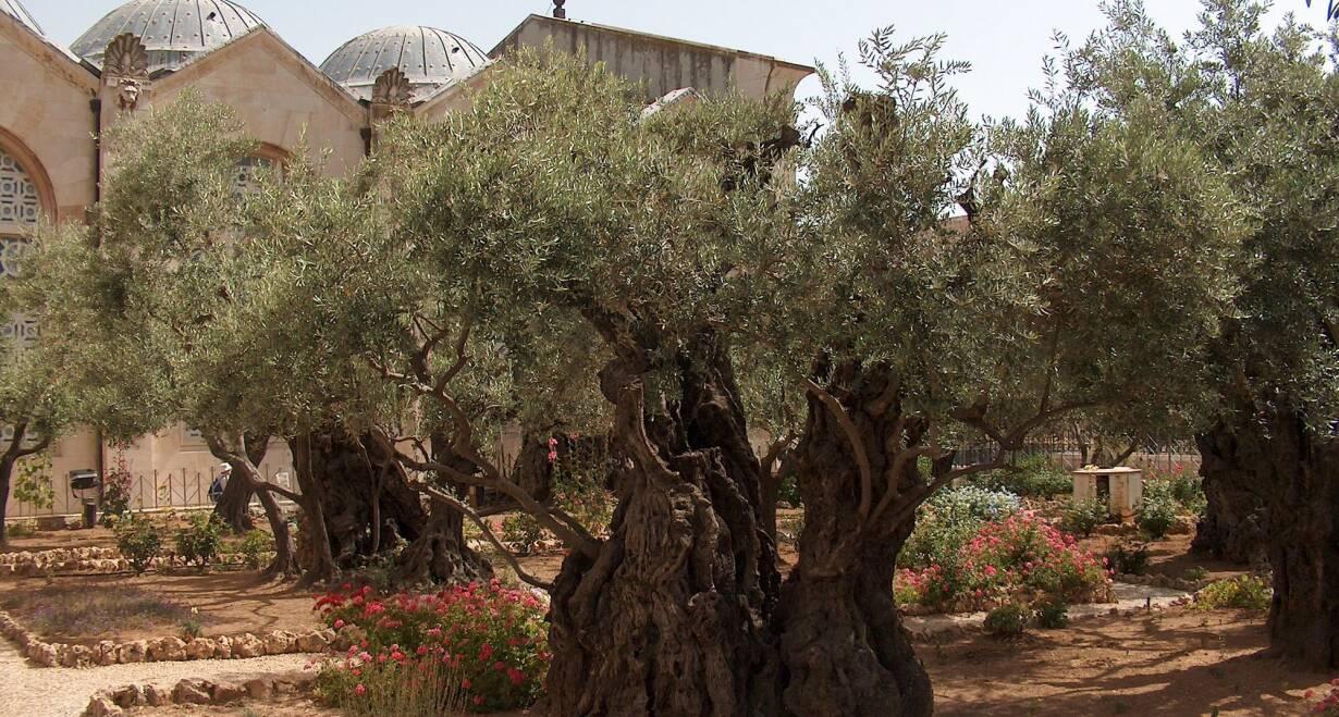 Israël en het Overjordaanse - IsraelJeruzalem, Oude Stad